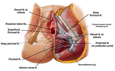 Pelvic pain - pudendal neuralgia