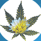 Medical Marijuana | (outpatient drug rehab center) in Brooklyn NYC