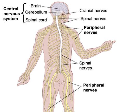 Neurological Disorders NY | Best Neurologist in Brooklyn